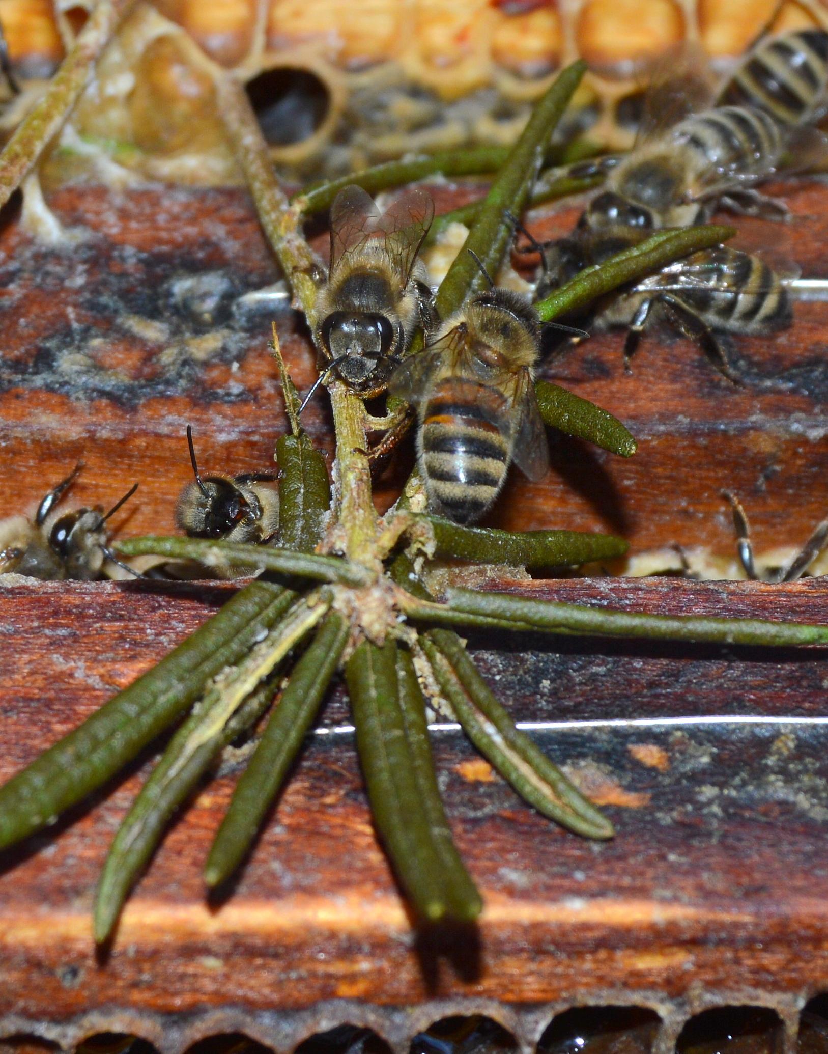 Insektenfreundliche Pflanzen Liste